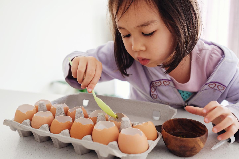 seeds in eggshells